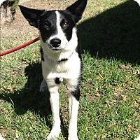Adopt A Pet :: ARIEL - San Pedro, CA
