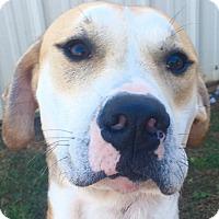 Adopt A Pet :: Jax - Southbury, CT