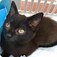 Adopt A Pet :: Kahlua - Smithtown, NY