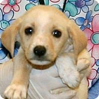 Adopt A Pet :: Pugsley - Wildomar, CA