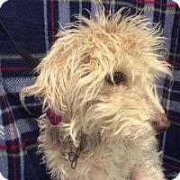 Adopt A Pet :: I1266489 - Pomona, CA