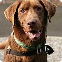Adopt A Pet :: Dug - Bellingham, WA
