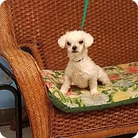 Adopt A Pet :: Lizy - Tulsa, OK