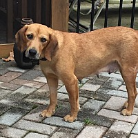 Adopt A Pet :: Mary - Monroe, NC