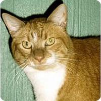 Adopt A Pet :: Regis - Medway, MA