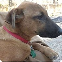 Adopt A Pet :: George - Douglas, MA