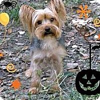 Adopt A Pet :: Ting - Cantonment, FL