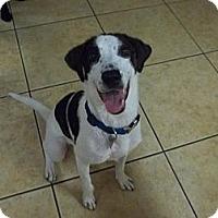 Adopt A Pet :: Elvis - Tallahassee, FL