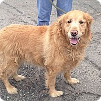 Adopt A Pet :: Puchi - Rockaway, NJ