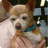 Adopt A Pet :: Candy - Long Beach, CA