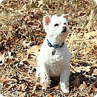 Adopt A Pet :: Yoda - Homewood, AL