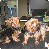 Adopt A Pet :: The Twins - Conroe, TX