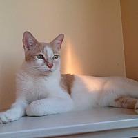 Adopt A Pet :: Prince Charles - San Fernando Valley, CA