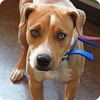 Adopt A Pet :: Timmy - Scottsdale, AZ
