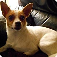 Adopt A Pet :: Tina - Beavercreek, OH