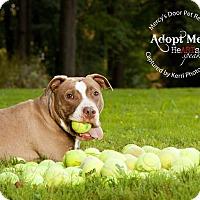 Adopt A Pet :: Chunk - Medina, OH
