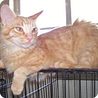 Adopt A Pet :: RickyBobby - Scottsdale, AZ