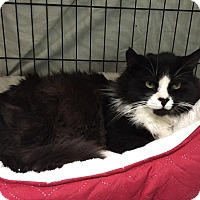Adopt A Pet :: Noah - Warwick, RI