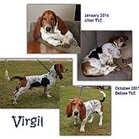 Adopt A Pet :: Virgil - Marietta, GA