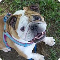 Adopt A Pet :: Rocko - Santa Ana, CA