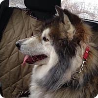Adopt A Pet :: Sasha - Adoption Pending - Congrats Hudgens Family - Hewitt, NJ