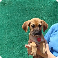 Adopt A Pet :: Radio - Oviedo, FL
