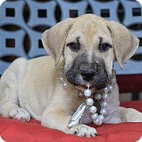 Adopt A Pet :: Meadow - Baton Rouge, LA