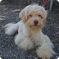 Adopt A Pet :: Nicki - Yucaipa, CA