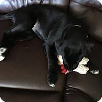 Adopt A Pet :: Sephora - Dayton, OH