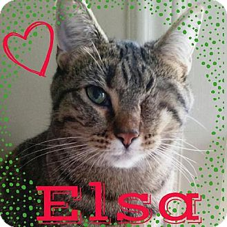 Domestic Shorthair Cat for adoption in Grand Blanc, Michigan - Elsa