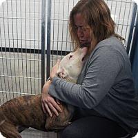 Adopt A Pet :: Chaos - Henderson, NC
