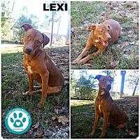 Adopt A Pet :: Lexi - Kimberton, PA