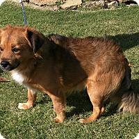 Adopt A Pet :: Noah - Ottawa, KS