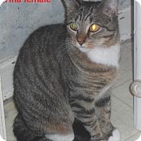 Adopt A Pet :: Tina - Pensacola, FL