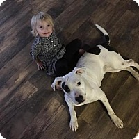 Adopt A Pet :: Patches - Florence, KY