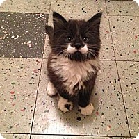 Adopt A Pet :: Ralph - Eagan, MN