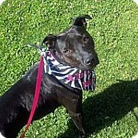 Adopt A Pet :: Annie - Bakersfield, CA