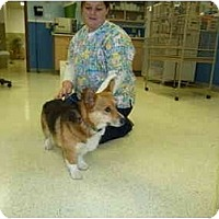 Adopt A Pet :: JD - Inola, OK