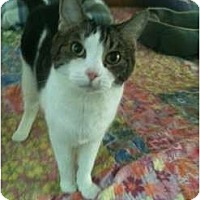 Adopt A Pet :: Bernie - Bonita Springs, FL