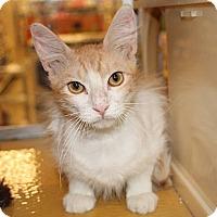 Adopt A Pet :: BoBo - Irvine, CA