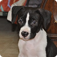 Adopt A Pet :: Hozier - Tumwater, WA