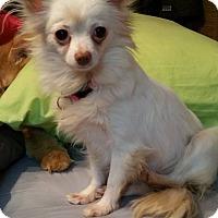 Adopt A Pet :: Maria - Prole, IA