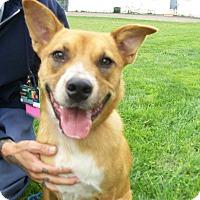 Adopt A Pet :: Britt - Lancaster, OH