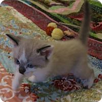 Adopt A Pet :: Roddy - Geneseo, IL