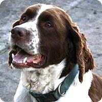 Adopt A Pet :: Gage - Minneapolis, MN