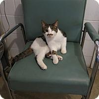 Adopt A Pet :: Eva - Geneseo, IL