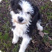 Adopt A Pet :: Rooney - Memphis, TN