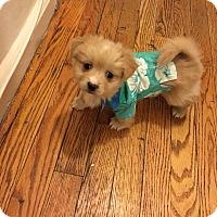 Adopt A Pet :: Cannoli - Long Beach, NY
