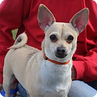 Adopt A Pet :: Baby - Elyria, OH