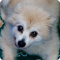 Adopt A Pet :: Hanson - Oakland Park, FL